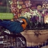 На входе в парк у касс нас встречают вот такие красавцы :)