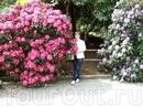 Германия,остров цветов Майнау на Бодензее