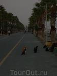 Знаменитые кипрские кошки на набережной Лимасола