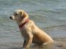 даже собаки наслаждаются морем....