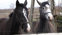 Лошадей в Польше разводят намного чаще чем в России. Видимо, там это выгодно!