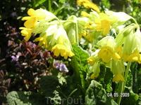 весенние цветы в парке