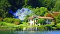 Поляна голубых цветов...Жаль что фотик слабенький...