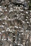 Остров Рунде. Его ещё называют птичьим островом. Около полумиллиона птиц гнездится здесь с февраля по август.