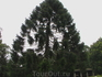 Дерево, встретившее нас в начале экскурсии по влажному экваториальному лесу