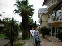 Красивая улица со старыми пальмами по которой мы ходили каждый день нашего пребывания в Лазаревском.