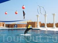 Дельфинарий в Sealanуa