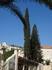 Сочетание природы, архитектуры всегда насыщено палитрой голубого израильского неба.