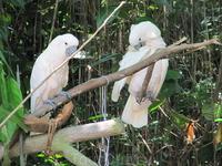 попугаи в зоопарке (не в клетке!)