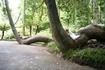 Парк около замка Пена