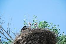 Я ни разу в жизни не видела такого количества аистов. Они свили свои огромные гнезда из веточек и мусора на вершинах столбов с электричеством.