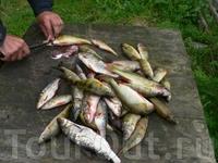 Рыба Сегозерья