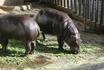 зоопарк коломбо