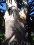 Этому оливковому дереву, к которому с большим трепетом относятся садовники, много-много-много лет. Поэтому оно бережно затянуто в специальный корсет.