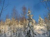 Окресности Сегозера в зимнюю ясную погоду (когда морозы).