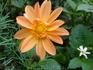 Растения в садах и парках Фуншала