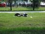 Чем не Париж, Лондон, Нью-Йорк или Вашингтон какой-нибудь? У нас люди тоже на травке устраивают пикники! Ну устали немного, сейчас отдохнут и дальше пикник ...
