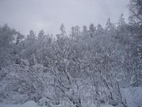 Ноябрь 2005г. Вот такой пейзаж.
