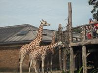 London Zoo.