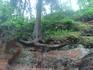 А мы восторгаемся деревьями Анкора - Камбоджи. Тут наши родные деревья еще не так цепляются. ))