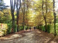 Осенний парк, золото листьев и яркое солнце. Замечательный был день.
