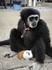 обезьяна в парке