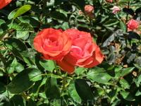 А вот розарий там красив и в жарком летнем воздухе стоит аромат роз.