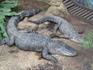 Крокодилы... неожиданно, но это самые страшные создания из тех, кого я видела. Когда смотришь на них даже жуть берет - глаза такие пустые, а сами просто ...