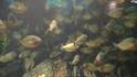 все там же в аквариуме