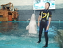 шоу белуг и дельфинов
