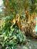 дерево желания