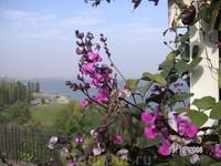 цветы на фоне моря
