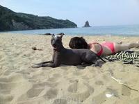 Джой охраняет меня на пляже.