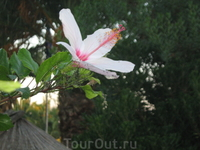 Тот же цветок, но белый.