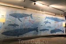 Ну а это разновидности китов, которые здесь водятся... Летом можно увидеть кашалотов, и, если повезет - зубатых китов, остромордых полосатиков, горбатых китов, дельфинов, касаток.