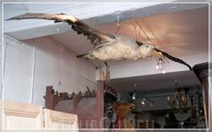 Руан,витрины,светильник из птицы