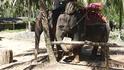 """Экскурсия в провинцию  Кхао Лак - """"Экзотические транспортные средства"""". А этот """"чистюля"""" не терпит на ногах дорожной грязи."""