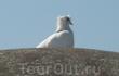 так получилось, что на фотографируемом нами бункере сидел белый голубь...