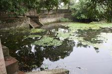 Пруд с лилиями на территории храма.