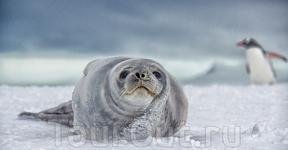 Животный мир Антарктиды удивительно разнообразен