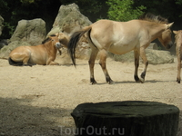 А вот и сами лошади