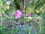 Цветы в Братском саду
