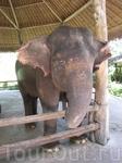 Этого слона можно самому кормить бананами, но страшновато, Бог знает, что у него на уме, может он за бананы убьет! А еще в сафари-парке можно было покататься ...
