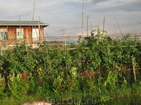 плавучие огороды