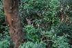 встреча в джунглях