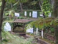 Азулезуш в Jardin Tropical Monte Palace