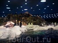 пингвинный рай