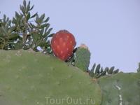 Очень красиво цветут кактусы и еще из таких плодов варят варенье
