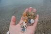 Потрясающие, я обожаю их. Ракушки - это совершенство во всем: в цвете, в пропорциях, в форме. Игрушки, сделанные божественной рукой.