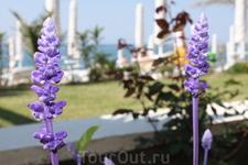 эффектные фиолетовые цветочки ( макро - моя  слабость)